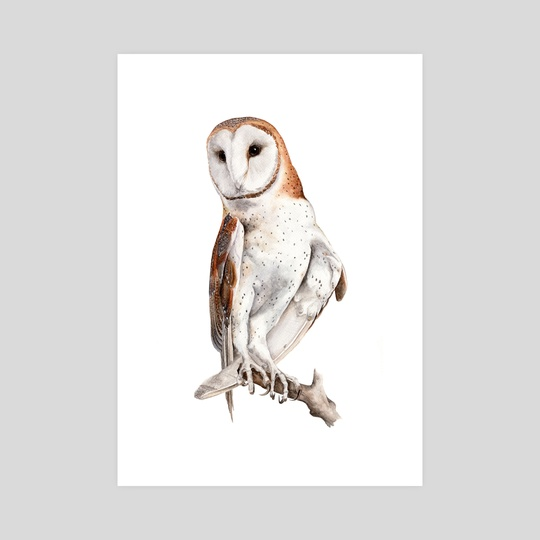 Barn Owl Watercolor by JP Lara
