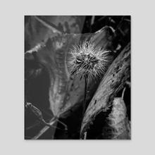 Dandelion Black and white - Acrylic by Irina Volkova