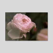 Stawberry Blonde Rose - Acrylic by Eye Spy Nature