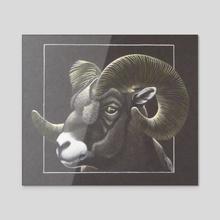 Big Horn - Acrylic by Lawrence Jones