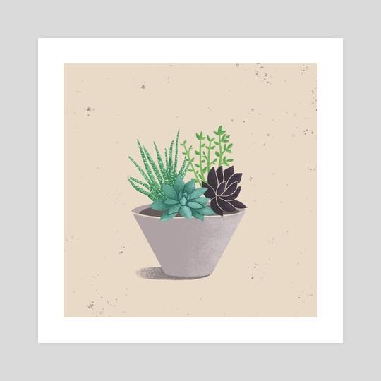 Succulent Plants by Nicole Clarizio