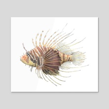 Pterois radiata - Radial Firefish (Lionfish) - Acrylic by Rene Martin