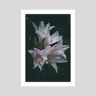 Lillies in Pink - Art Print by Kristin Elsen