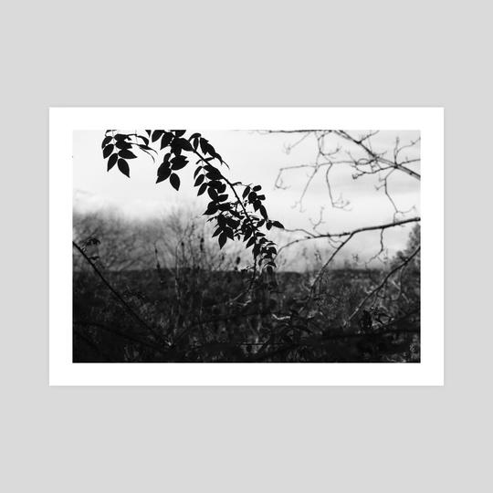 OVERGROWTH by Josh Lawson