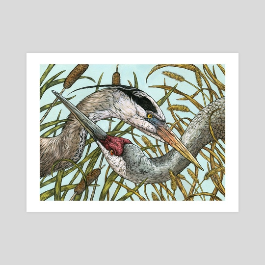 Heron & Crane by Emily Poole
