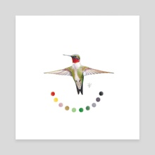 Ruby-throated Hummingbird - Canvas by Toy Jay