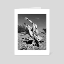 Driftwood II - Art Card by Ashley Gedz
