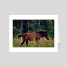 Foal in a Field - Art Card by Ashley Gedz