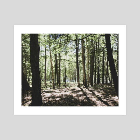 Mont Orford // Into the Woods (iii) by Helena Homsi