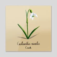Galnathus Nivalis, Snowdrop - Acrylic by Andrea Cruz Alegria