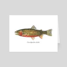Oncorhynchus clarkii - Cutthroat Trout - Art Card by Rene Martin
