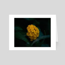 The Yellow Flower - Art Card by Dylan Kohne-Sanchez