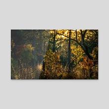 Evening Sun - Acrylic by Ryan Weeks