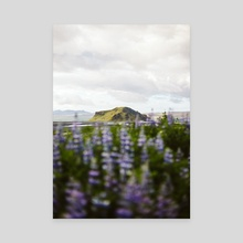Icelandic Flowers Pt 2 - Canvas by Jason Satterfield