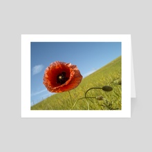 A Lone Poppy Flower - Art Card by Matthias Herzog