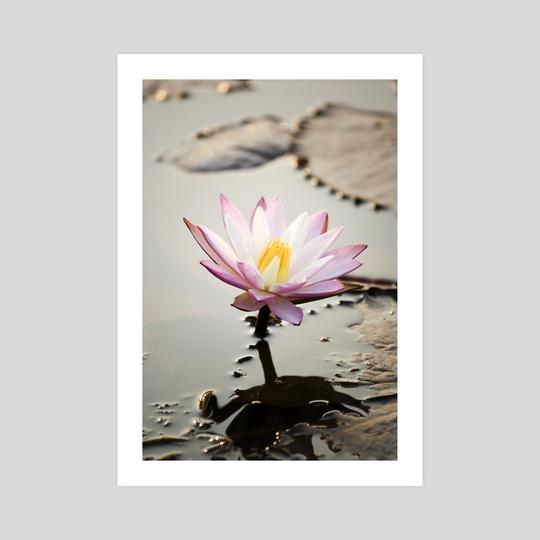 lotus flower by Brent Olson