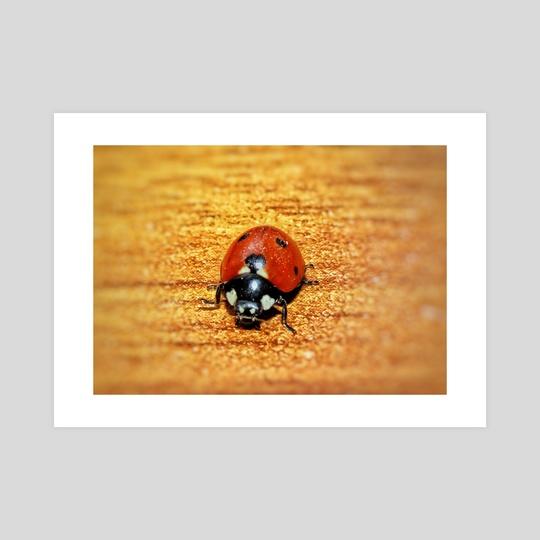 Ladybug by Vlad Stroe