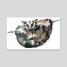 Possum Caught - Acrylic by Tracie MacVean