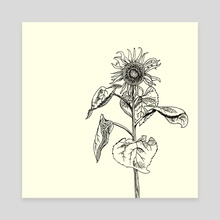 Sunflower - Canvas by Rachel Strodel