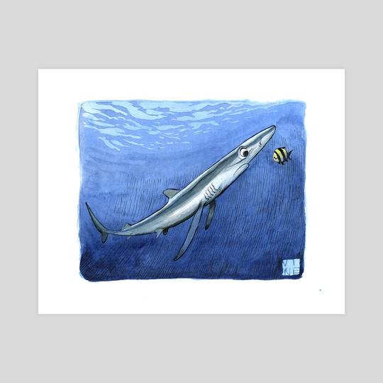 Blue shark by JP Vine