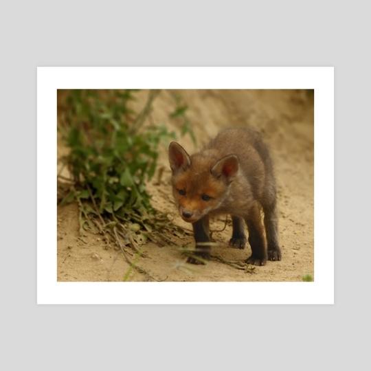Little fox by Gvardian Gyula
