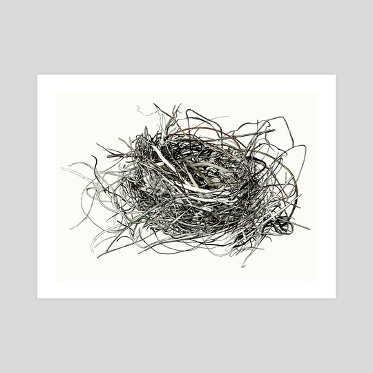 Nest Study by Sam Pash