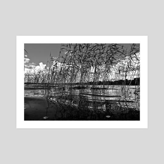 In The Reeds, #27, 7-2011 by Vlad Meytin