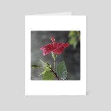 Hibiscus rosa-sinensis - Art Card by Planimarium Art
