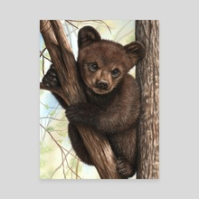 Bear Cub - Canvas by Richard Macwee