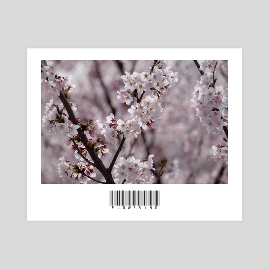 Flowering by John Jackson
