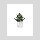Cactus II - Art Print by Liz Nugent