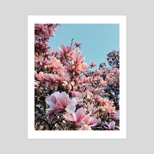 Magnolia Melody by georgia.nna