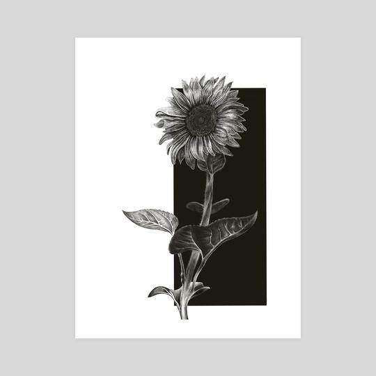 Sunflower by dreidel