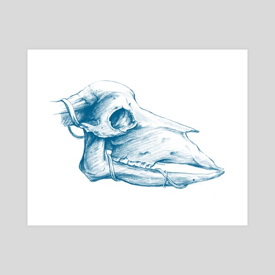 STUDY   Animal Skull Sketch Study by Kacper  Gilka