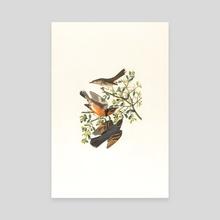 Lovely Birds  - Canvas by Sakid Js