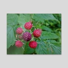 Red Berries - Acrylic by Ashley Gedz