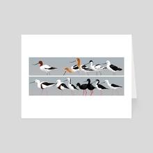 Recurvirostridae - Art Card by Luke Mancini