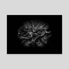 Backyard Flowers In Black And White 67 - Canvas by Brian Carson
