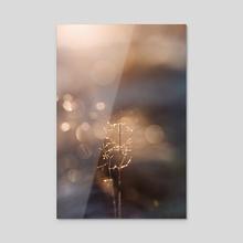 Straw - Acrylic by Eirik Havre