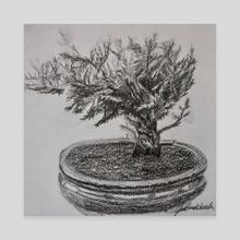 Bonsai - Canvas by Julianne Wheeler