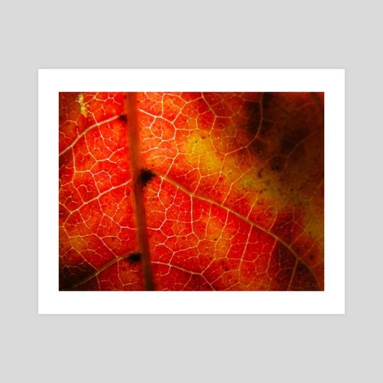 Color Me Fall... by Diana Kae