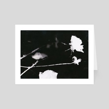 Roses Silhouette - Art Card by Spencer Gordon