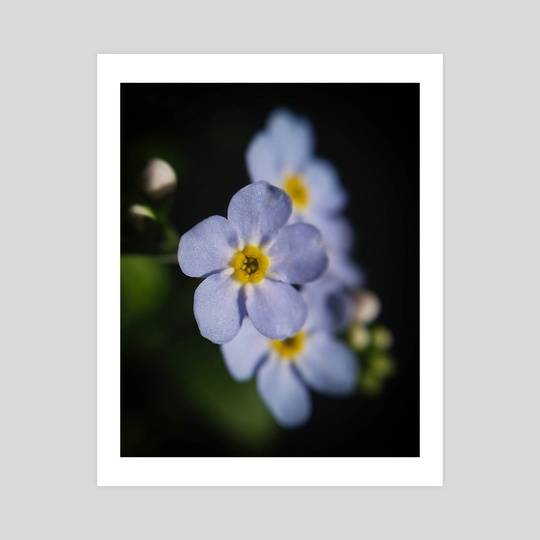 Forget-Me-Nots II by Ashley Gedz