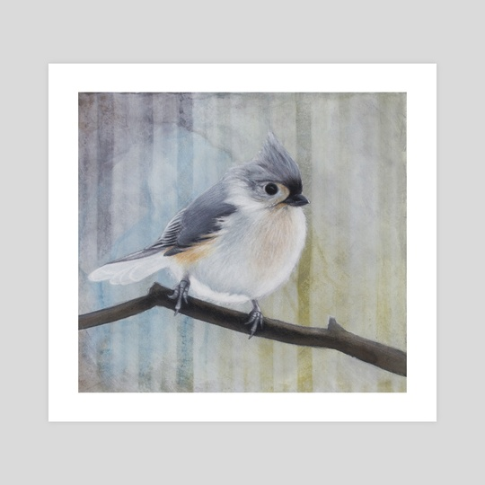 Tufted Titmouse  by Tom Schmitt