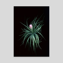 Tillandsia 02 - Canvas by Black Botanicals