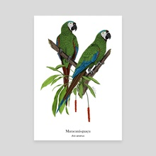 Chestnut-fronted Macaw - Canvas by Ilustra Fauna