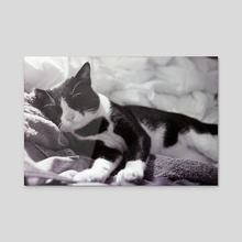 Cat on a towel - Acrylic by Benjamin Fauvel