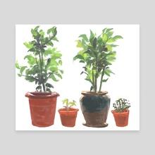 Herb Garden - Canvas by Allison Chin