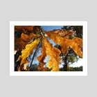 Autumn leaves against the blue sky - Art Print by Dmytro Rybin