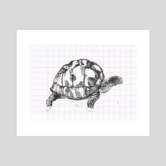 Turtle by Nérina Denais
